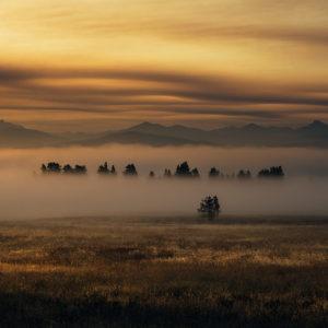 Foggy Morning in Yellowstone